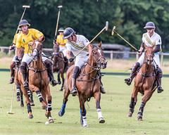 _D756949 (mcintyrephotographers) Tags: newforestpoloclub newforestpolo england ponies 18th august 2019 blue jackets tournament polo outdoors brockenhurst mallets gallop games chukkas