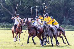 _D756906 (mcintyrephotographers) Tags: newforestpoloclub newforestpolo england ponies 18th august 2019 blue jackets tournament polo outdoors brockenhurst mallets gallop games chukkas