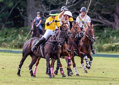_D756876 (mcintyrephotographers) Tags: newforestpoloclub newforestpolo england ponies 18th august 2019 blue jackets tournament polo outdoors brockenhurst mallets gallop games chukkas