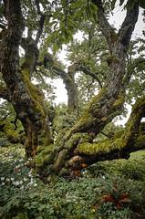 Self Portrait (marvhimmel) Tags: tree eugenerosegarden