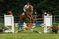 A7306734_s (AndiP66) Tags: kva pferdesporttage mettmenstetten kavallerieverein bezirk affoltern reitanlage grüthau 14september2019 september 2019 springen pferd horse schweiz switzerland kantonzürich cantonzurich concours wettbewerb horsejumping equestrian sports springreiten pferdespringen pferdesport sport sony sonyalpha 7markiii 7iii 7m3 a7iii alpha ilce7m3 sonyfe70300mmf4556goss fe70300mm 70300mm f4556 emount andreaspeters