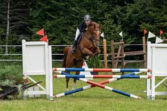 A7306684_s (AndiP66) Tags: kva pferdesporttage mettmenstetten kavallerieverein bezirk affoltern reitanlage grüthau 14september2019 september 2019 springen pferd horse schweiz switzerland kantonzürich cantonzurich concours wettbewerb horsejumping equestrian sports springreiten pferdespringen pferdesport sport sony sonyalpha 7markiii 7iii 7m3 a7iii alpha ilce7m3 sonyfe70300mmf4556goss fe70300mm 70300mm f4556 emount andreaspeters