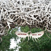 Jackson Hole Wyoming Antlers
