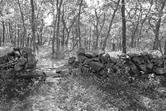 Old stone wall (Chaz Cheadle) Tags: nikond80 d80 blackandwhite stone stonewall forest trees