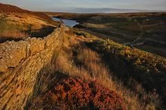 Moorland photography in the Peak District. (Darren Speak) Tags: sunshine evening wall grasses moorland peakdistrict hardenreservoir