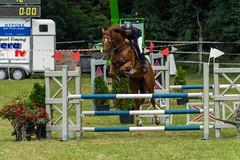 A7306692_s (AndiP66) Tags: kva pferdesporttage mettmenstetten kavallerieverein bezirk affoltern reitanlage grüthau 14september2019 september 2019 springen pferd horse schweiz switzerland kantonzürich cantonzurich concours wettbewerb horsejumping equestrian sports springreiten pferdespringen pferdesport sport sony sonyalpha 7markiii 7iii 7m3 a7iii alpha ilce7m3 sonyfe70300mmf4556goss fe70300mm 70300mm f4556 emount andreaspeters