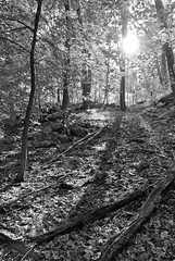 Afternoon Sun in the Woods (Chaz Cheadle) Tags: nikond80 d80 blackandwhite trees forest hills sunlight shadows silhouettes