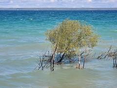 Lake Michigan Blues & Green (Neil Noland) Tags: michigan mackinawcity lakemichigan