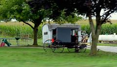amish buggy (bluebird87) Tags: amish buggy film dx0 c41 epson v800 kodak ektar jobo lightroom nikon f100