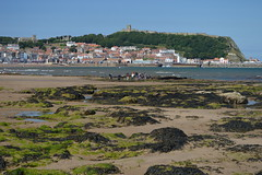 South Bay towards the Harbour (CoasterMadMatt) Tags: scarborough2019 scarborough seasideresort seasidetown seaside town towns coastaltown coastal englishtowns englishseaside scarboroughcastle castle castles yorkshirecastles castlesinyorkshire englishcastles castlesinengland oldtown old historictown harbour marina southbay bay beach beaches yorkshirebeaches coastallandscape landscape landscapes building structure architecture northyorkshire yorkshire yorks england britain greatbritain gb unitedkingdom uk july2019 summer2019 july summer 2019 coastermadmattphotography coastermadmatt photography photos photographs nikond3200