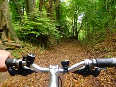Back in Hogtrough Lane (cycle.nut66) Tags: hogtrough lane chilterns chiltern hills escarpment bridleway bridlepath handlebars bike bicycle moving movement trees leaves green brown panansonic lumix lx5 leica summicron