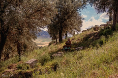 Under the Shade of Olive Trees (Irina1010) Tags: landscape hill trees olivetrees woman resting shade volubilis archaeologicalsite morocco canon