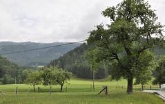 Niederösterreich Mostviertel Moosau_DSC0357 (reinhard_srb) Tags: niederösterreich mostviertel moosau regenwetter landschaft idylle ferien weide obstbäume wald berge urlaub