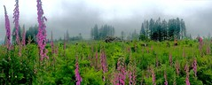 ABBY-PlantDiversity-DaveCrandall (NEON Science) Tags: neon nsf nationalecologicalobservatorynetwork