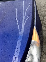 259/365: Rain Tree (jchants) Tags: 365the2019edition 3652019 day259365 16sep19 project365 car blue 119in2019 75midnightblue