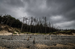 Chopped (Glen Parry Photography) Tags: glenparryphotography landscape d7000 nikon nikond7000 nikonphotographer nikonphotography northwales sigma sigma1020mm uklandscape wales walking beach coast forest pine clouds graysky newborough