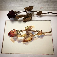Day 1500 The #rose #painting for today. #watercolour #watercolourakolamble #sketching #stilllife #flower #art #fabrianoartistico #hotpress #paper #dailyproject (akolamble) Tags: rose painting watercolour watercolourakolamble sketching stilllife flower art fabrianoartistico hotpress paper dailyproject
