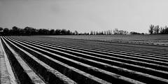LInes (jo.misere) Tags: lijnen lines voeren belgie bw zw