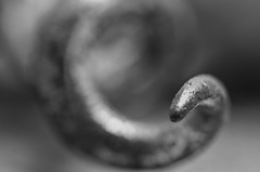 Corkscrew (Capturedbyhunter) Tags: fernando caçador marques fajarda coruche ribatejo santarém portugal pentax k5 macro extreme corkscrew black white preto e branco monochrome monocromático manual focus focagem foco pentaxart