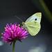 sulle ali di una farfalla ...