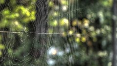Large Web (blazer8696) Tags: 2019 dwyparents ecw foxrun hdr hillsborough img569456painterly nc northcarolina t2019 usa unitedstates spider web