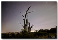 oaks at mundon (jonallard) Tags: mundon trees essex sonya6000 samyang stars nightime night nightscape landscape tree
