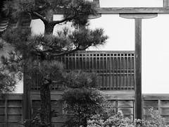 Evergreen (Nick Condon) Tags: evergreen kyoto olympus45mm olympusem10 plants shadow temple tile tree wall wood