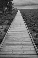 Further Down The Path (Stueyman) Tags: sony alpha a7 a7ii boardwalk wetlands samphire sky clouds wood nails screws vanishing blackandwhite bw noiretblanc zeiss batis batis240cf 40mm outside