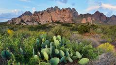 La Cueva Flora (BongoInc) Tags: newmexico chihuahuandesert organmountains desertflora cactus desertlandscape nationalmonument
