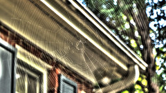 Large Web (blazer8696) Tags: 2019 dwyparents ecw foxrun hdr hillsborough img570012surreal nc northcarolina t2019 usa unitedstates spider web