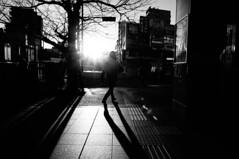 (ademilo) Tags: street streetphotography streetlight sunset sun sunlight sunshine shadows shadow city cityscape citylife contrast walk walking pedestrian people passer tokyo town townscape japan backlight light lights landscape