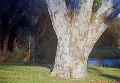 MINOLTA  A SIGMA 70-300-006 (brett.m.johnson) Tags: sigma zoom lens minolta dynax 404 sidewalk a3 mountain alpha c41 colourfilm cinestill photography bullcreek rossmoyne shelley perth westernaustralia canning river water powerlines sunrise trees moon watering canningbridge sky