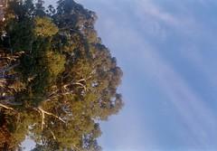 MINOLTA  A SIGMA 70-300-009 (brett.m.johnson) Tags: sigma zoom lens minolta dynax 404 sidewalk a3 mountain alpha c41 colourfilm cinestill photography bullcreek rossmoyne shelley perth westernaustralia canning river water powerlines sunrise trees moon watering canningbridge sky