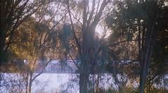 MINOLTA  A SIGMA 70-300-018 (brett.m.johnson) Tags: sigma zoom lens minolta dynax 404 sidewalk a3 mountain alpha c41 colourfilm cinestill photography bullcreek rossmoyne shelley perth westernaustralia canning river water powerlines sunrise trees moon watering canningbridge sky