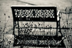 Seating and seed heads (tonguedevil) Tags: outdoor outside garden summer bench seat seedheads lawn bw light shadows sunlight