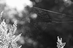 DSCF2252 (jpeg86) Tags: jpeg fujifilm takumar pentax spider