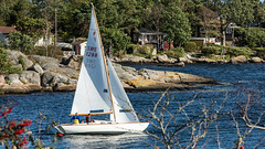 Folkboat - off to the races (tonyguest) Tags: folkboat folkbåt sailing boat yacht water rocks karlshamn fiskhamnen sweden tonyguest swe1288 blekinge tree trees sail crew waterside cottage