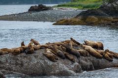 Surprise in the background (jeff's pixels) Tags: alaska landscape wildlife nature juneau sealife sea lion bird bus plane train car explore