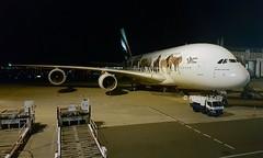 Emirates                                                            Airbus A380                                                   A6-EOM (Flame1958) Tags: emirates emiratesa380 airbus a380 380 a6eom ek317 myflightaircraft kix kansaiairport osaka osakaairport worldwildlife unitedforwildlife 160919 0919 2019 s6 samsungs6 phonepicture