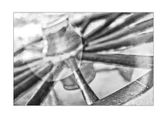 lying wheel (Armin Fuchs) Tags: arminfuchs nomansland wheel lyingwheel diagonal niftyfifty anonymousvisitor thomaslistl wolfiwolf jazzinbaggies