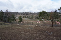North end of Majura Vineyard at the Truffle Farm (spelio) Tags: cbrregion act canberra sep 2019