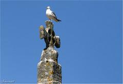 Sé do Porto (Ubierno) Tags: portugal europa europe porto oporto ubierno tripeiro portuense cale alanos duero douro river río suevos catedral cathedral sé seo románico romanesque gótico gothic