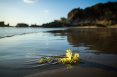 Alga (jlben Juan Leon) Tags: grii playas ricoh ricohgrii roche