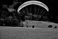 soft landing (b/w photos) Tags: adventures adventure flying paragliding bw black white sw schwarz weiss noireblanc monochrome