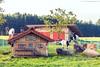 Ziegenfamilie im Allgäu (PADDYSCHMITT.DE) Tags: wangen allgäu ziegen bock ziegenbock tiere gamsen