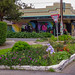 Cafe Latino's Garden