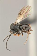 Anglų lietuvių žodynas. Žodis entomophagous reiškia entomofaginis lietuviškai.