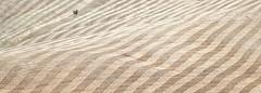 Stripes (Massimiliano Teodori) Tags: valdorcia tuscany landscape italy minimal stripes field tree solitaire