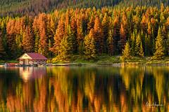 The boat house (Marc Haegeman Photography) Tags: malignelake jaspernationalpark canada lake conifer boathouse reflections marchaegemanphotography nikond850 pinebeetle
