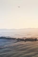 Flying over the desert #8 (Massimiliano Teodori) Tags: valdorcia tuscany landscape italy buteobuteo poiana